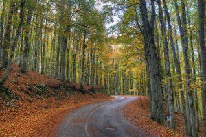 conseils conduite automne hiver